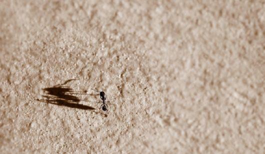 acabar-com-formigas