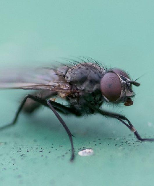 mosquicida